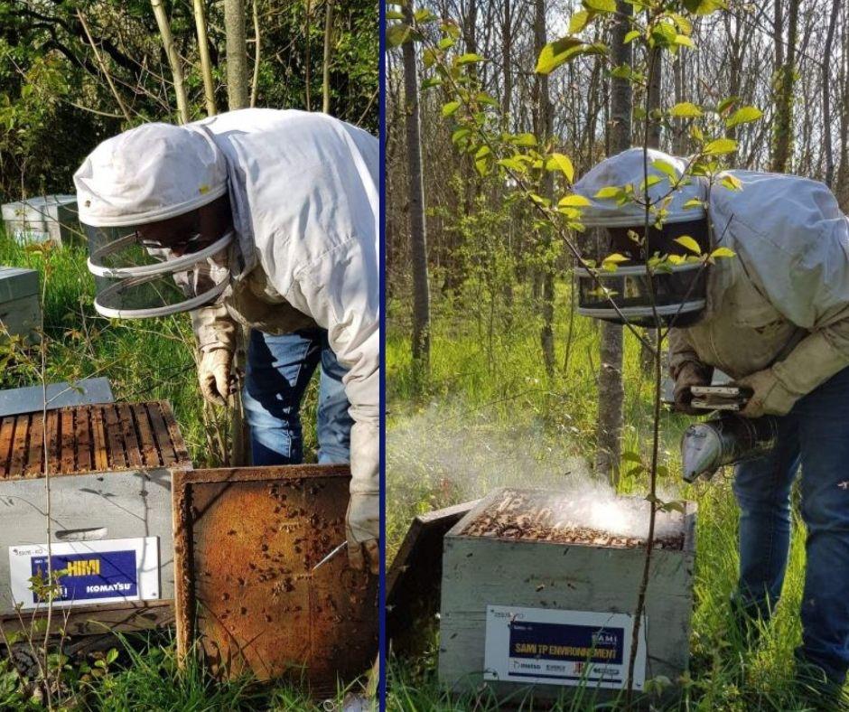 Les abeilles de Sami TP et Sami TP Environnement